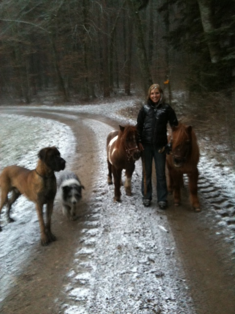 I am in Love with these two little guys. Look, the dog is as big as the ponys :-)