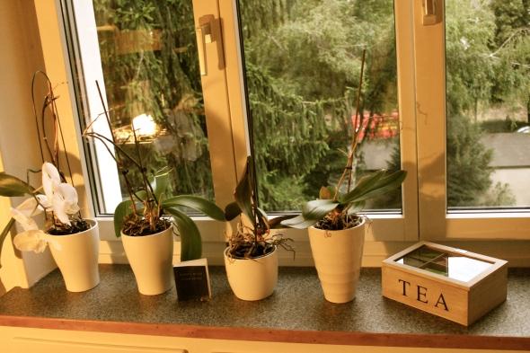 Kitchen Window Flowers